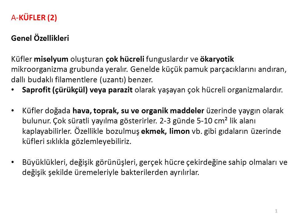 A-KÜFLER (2) Genel Özellikleri.