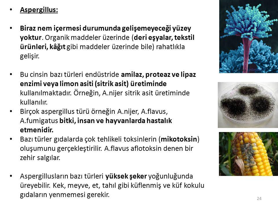 Aspergillus: