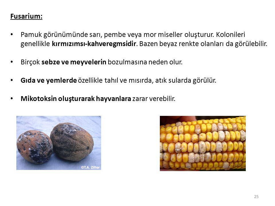 Fusarium: