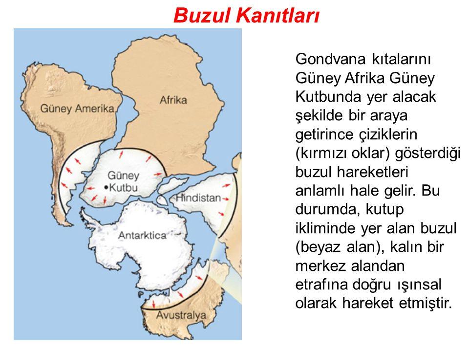 Buzul Kanıtları Gondvana kıtalarını Güney Afrika Güney Kutbunda yer alacak şekilde bir araya.
