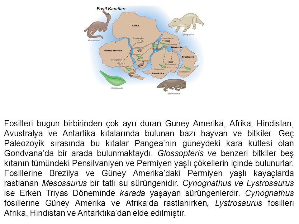 Fosilleri bugün birbirinden çok ayrı duran Güney Amerika, Afrika, Hindistan, Avustralya ve Antartika kıtalarında bulunan bazı hayvan ve bitkiler.