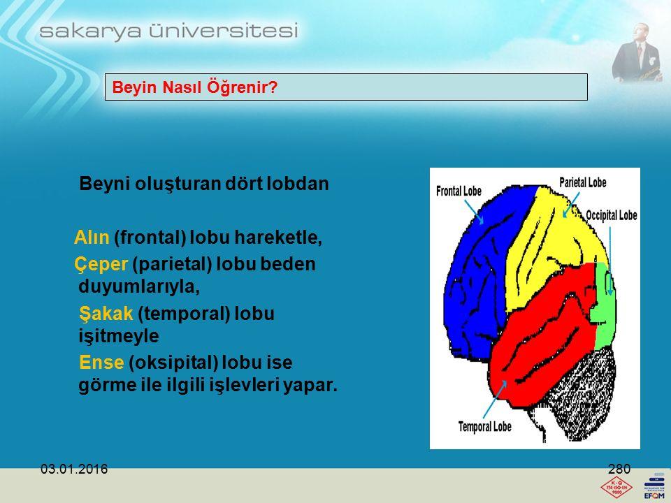 Beyni oluşturan dört lobdan Alın (frontal) lobu hareketle,