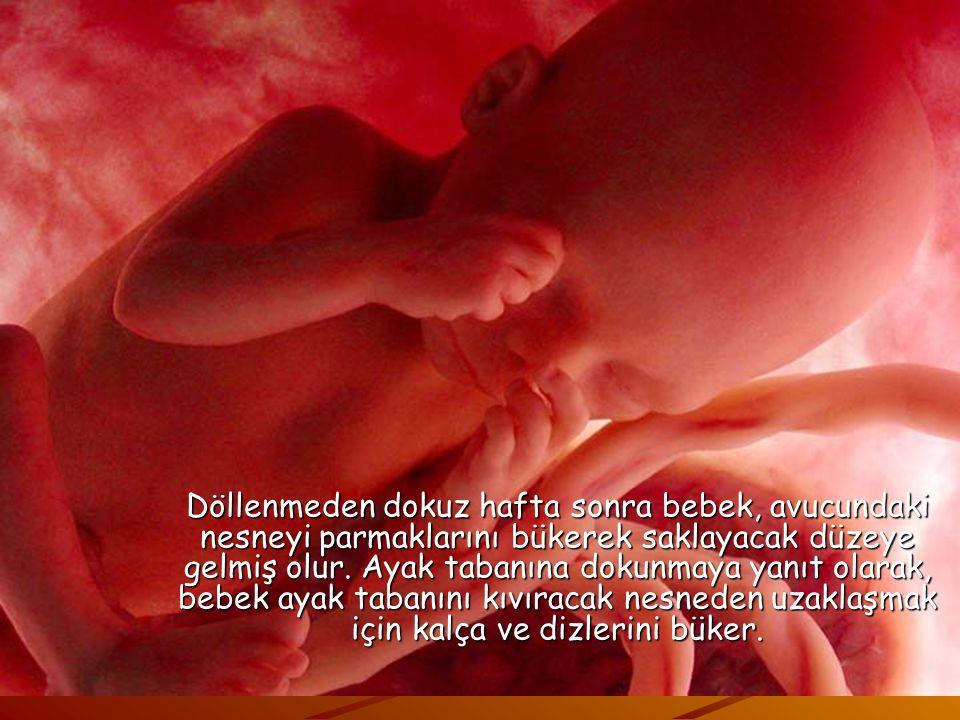 Döllenmeden dokuz hafta sonra bebek, avucundaki nesneyi parmaklarını bükerek saklayacak düzeye gelmiş olur.