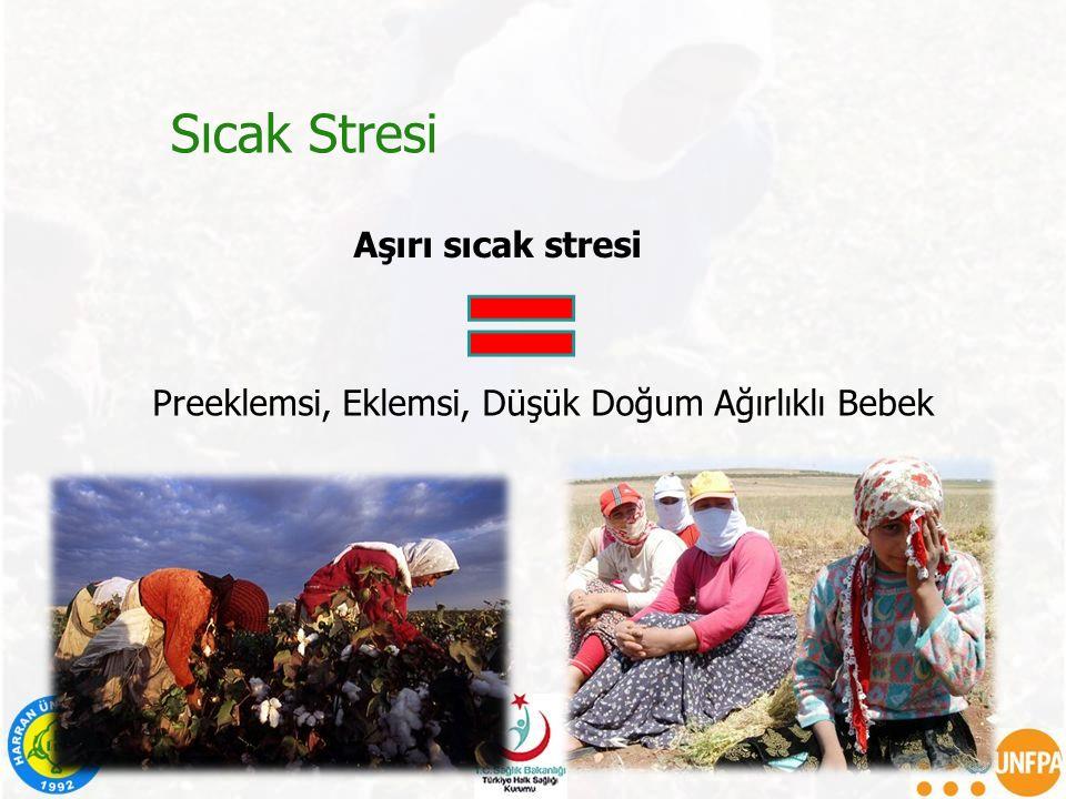 Sıcak Stresi Aşırı sıcak stresi
