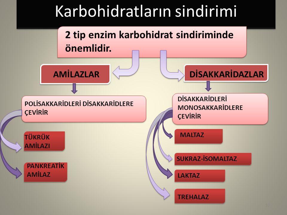 Karbohidratların sindirimi