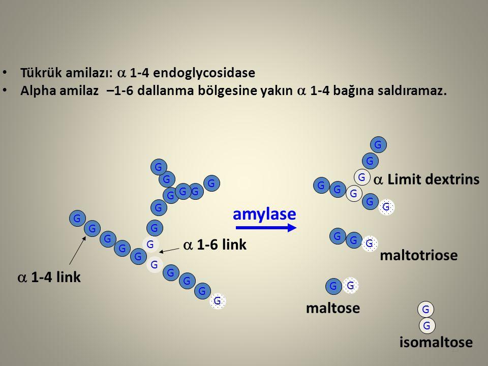 amylase a Limit dextrins a 1-6 link maltotriose a 1-4 link maltose