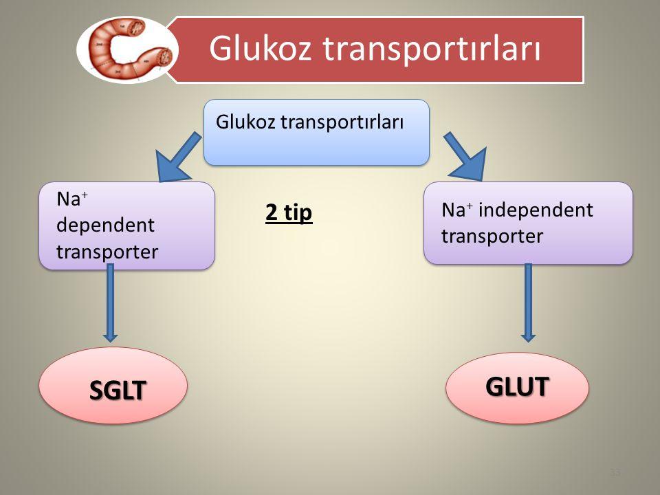 Glukoz transportırları