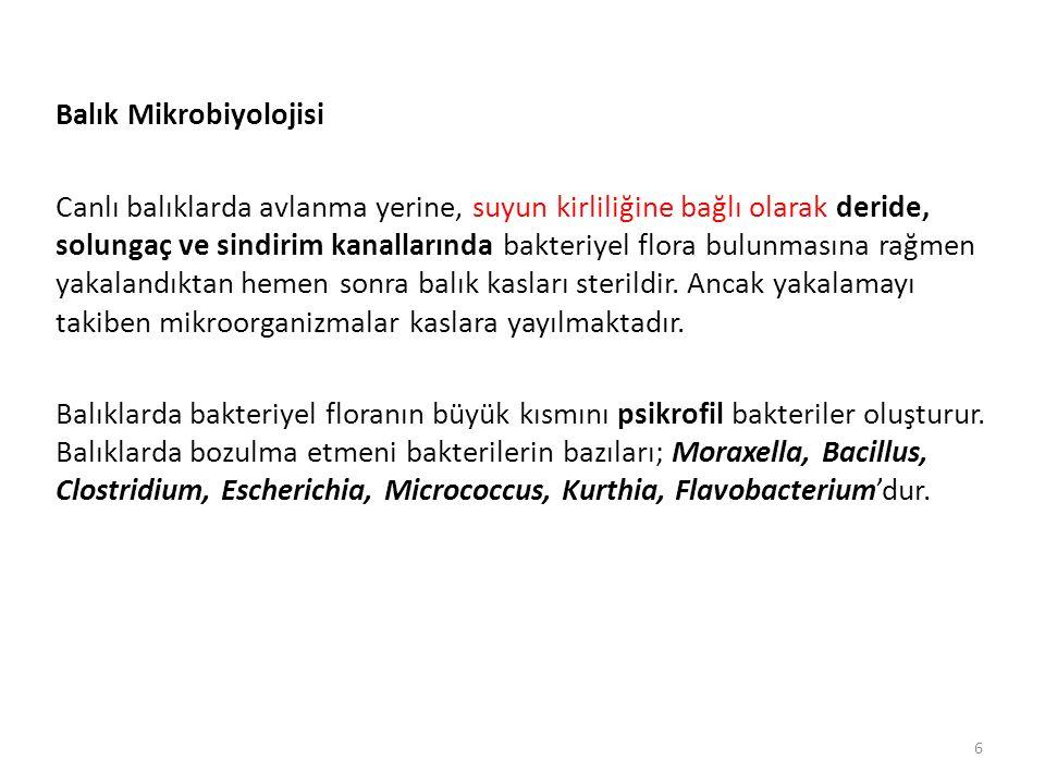 Balık Mikrobiyolojisi