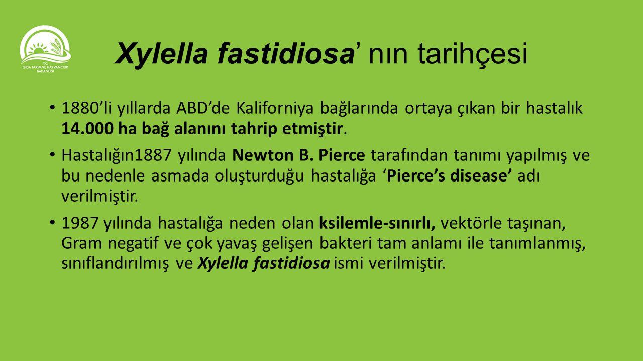 Xylella fastidiosa' nın tarihçesi