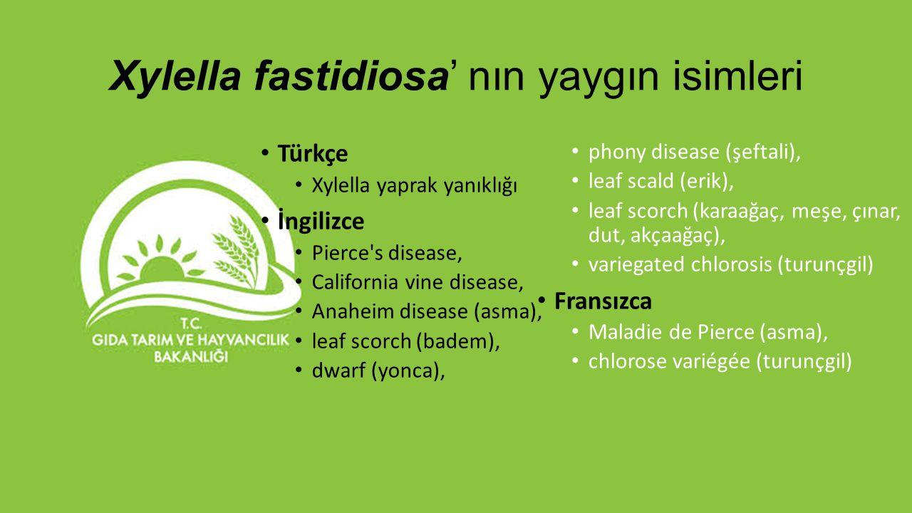 Xylella fastidiosa' nın yaygın isimleri