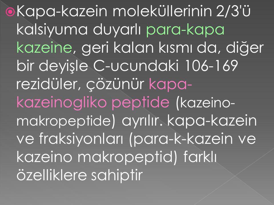Kapa-kazein moleküllerinin 2/3 ü kalsiyuma duyarlı para-kapa kazeine, geri kalan kısmı da, diğer bir deyişle C-ucundaki 106-169 rezidüler, çözünür kapa-kazeinogliko peptide (kazeino- makropeptide) ayrılır.