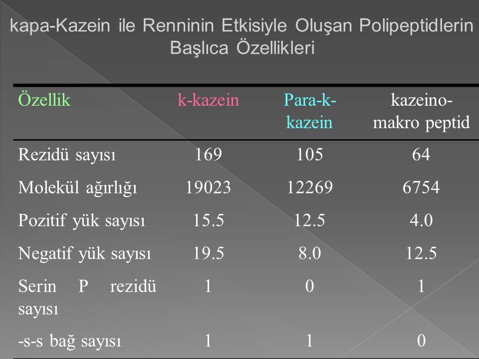 kapa-Kazein ile Renninin Etkisiyle Oluşan Polipeptidlerin