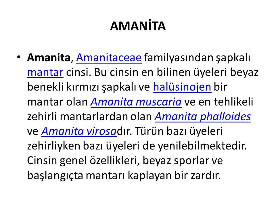 AMANİTA