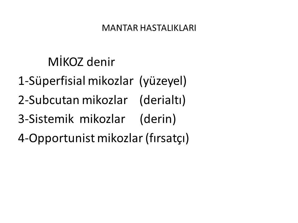 MANTAR HASTALIKLARI