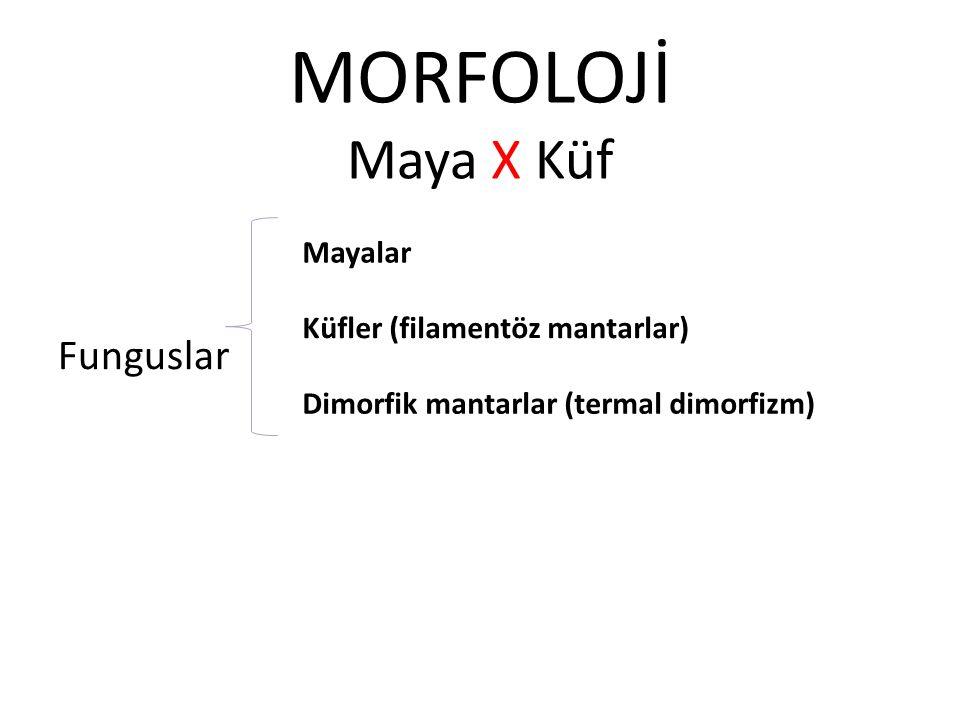 MORFOLOJİ Maya X Küf Funguslar Mayalar Küfler (filamentöz mantarlar)