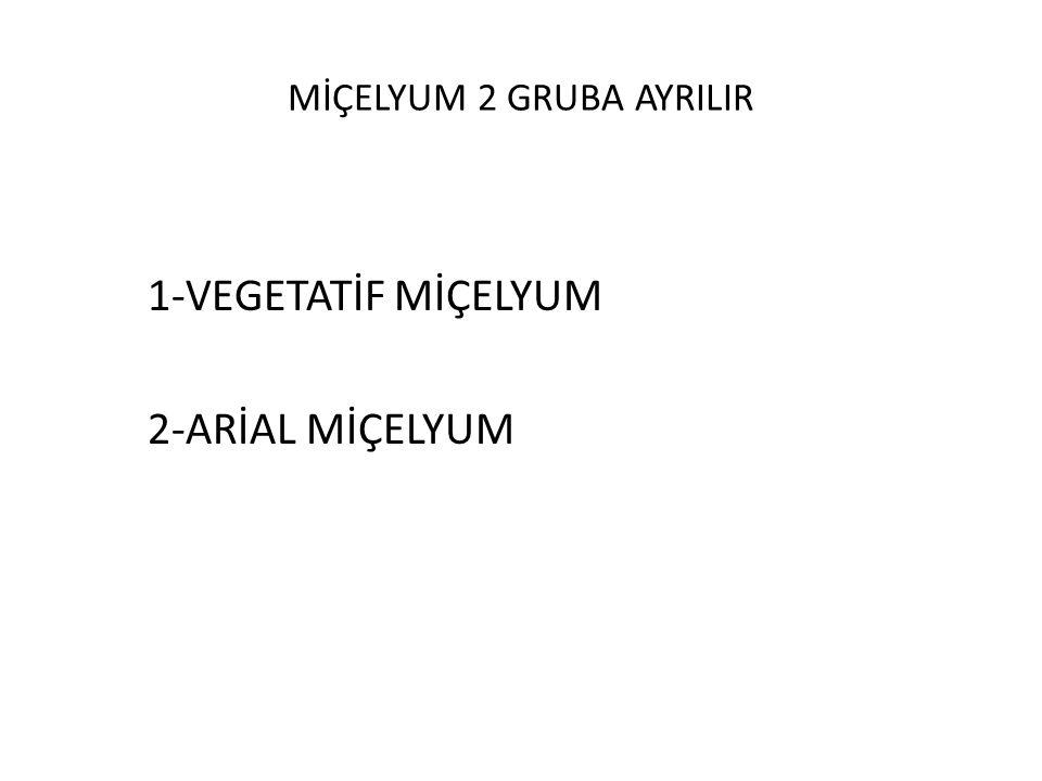 MİÇELYUM 2 GRUBA AYRILIR