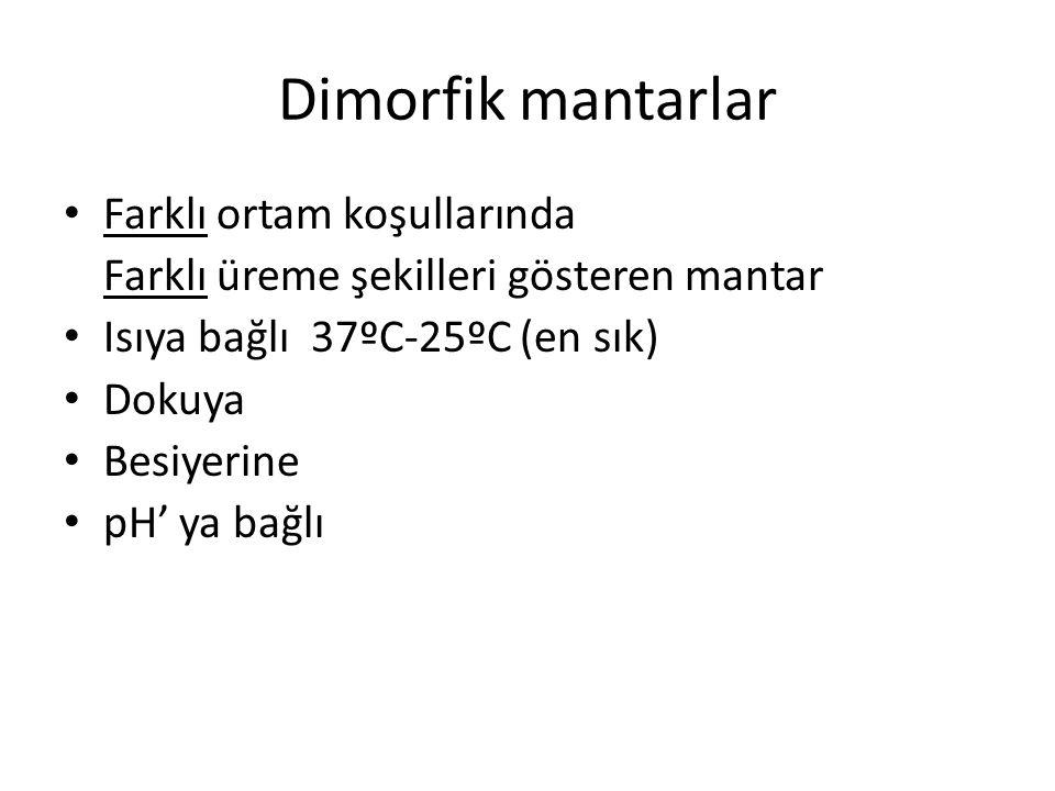 Dimorfik mantarlar Farklı ortam koşullarında