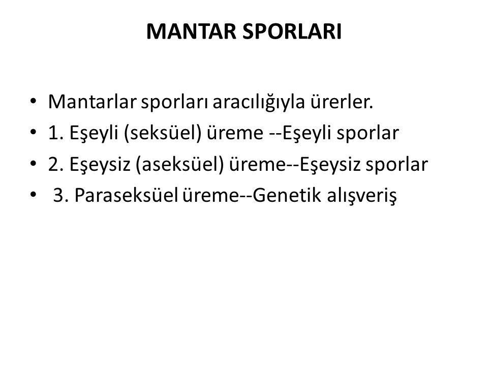MANTAR SPORLARI Mantarlar sporları aracılığıyla ürerler.