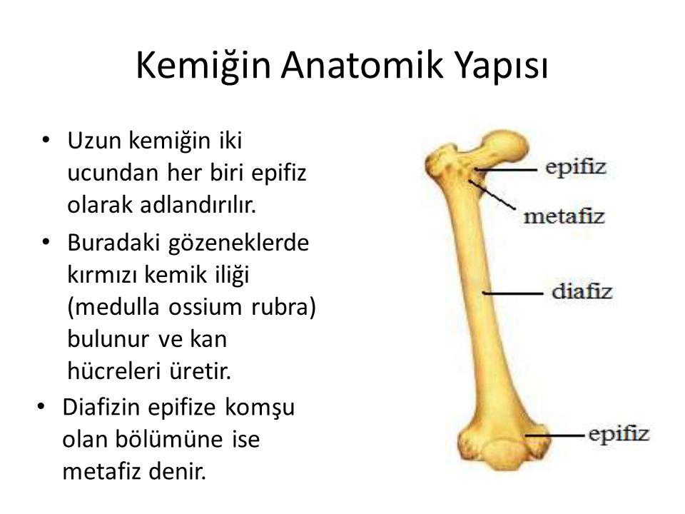 Kemiğin Anatomik Yapısı