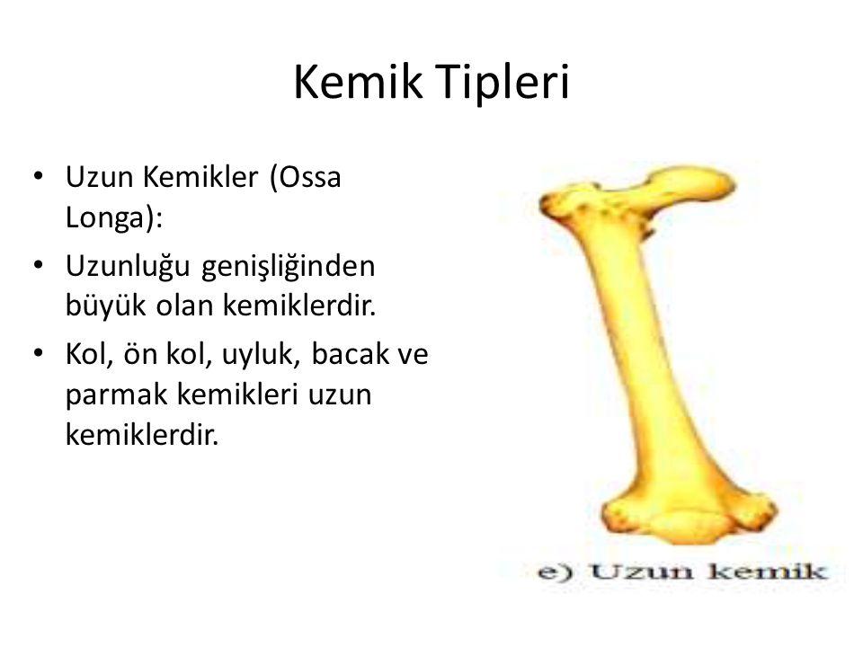 Kemik Tipleri Uzun Kemikler (Ossa Longa):