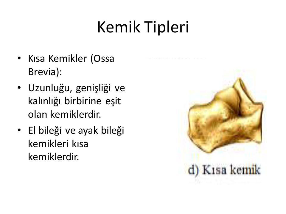 Kemik Tipleri Kısa Kemikler (Ossa Brevia):