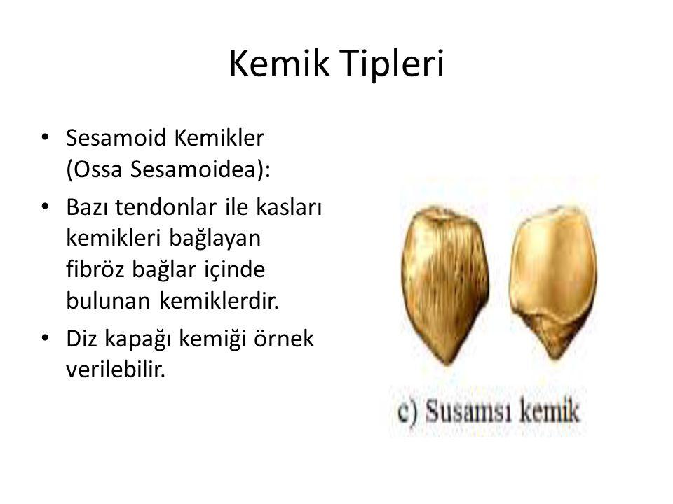 Kemik Tipleri Sesamoid Kemikler (Ossa Sesamoidea):