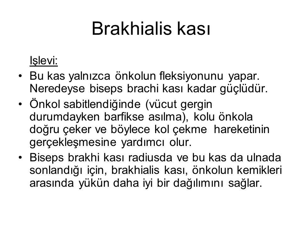 Brakhialis kası Işlevi: