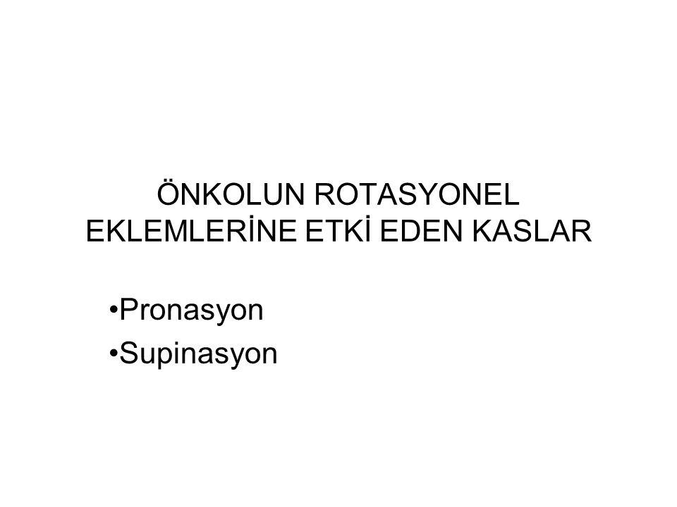 ÖNKOLUN ROTASYONEL EKLEMLERİNE ETKİ EDEN KASLAR