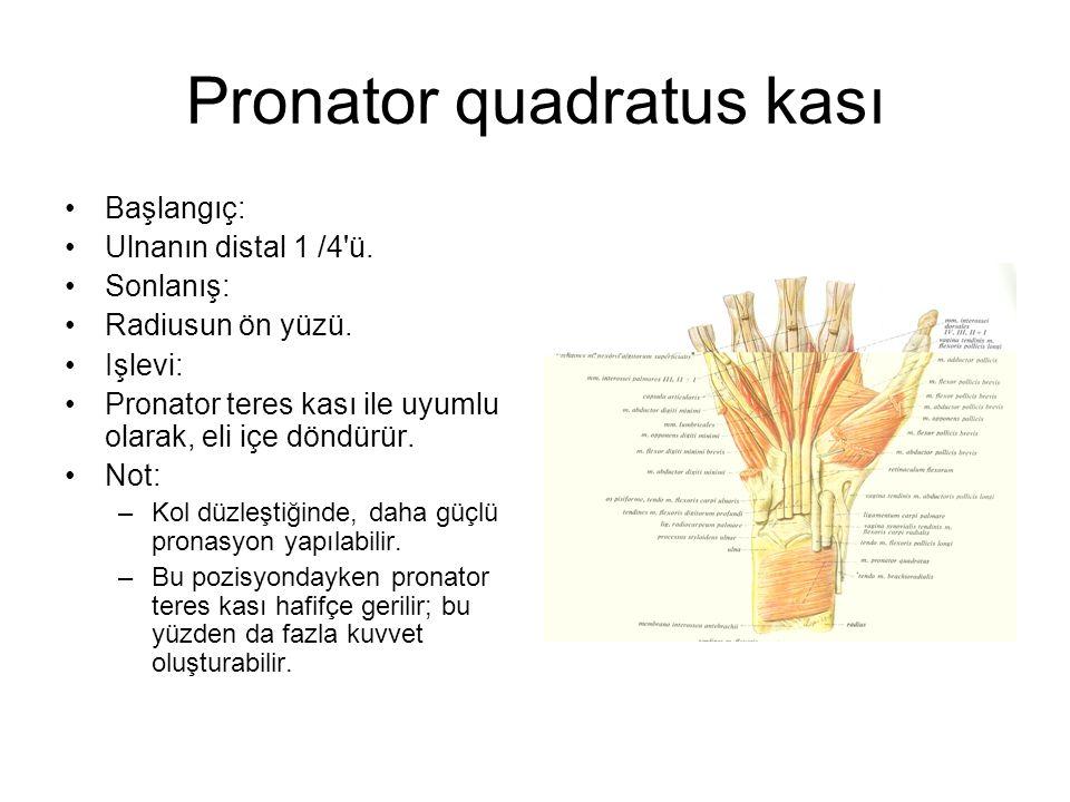 Pronator quadratus kası