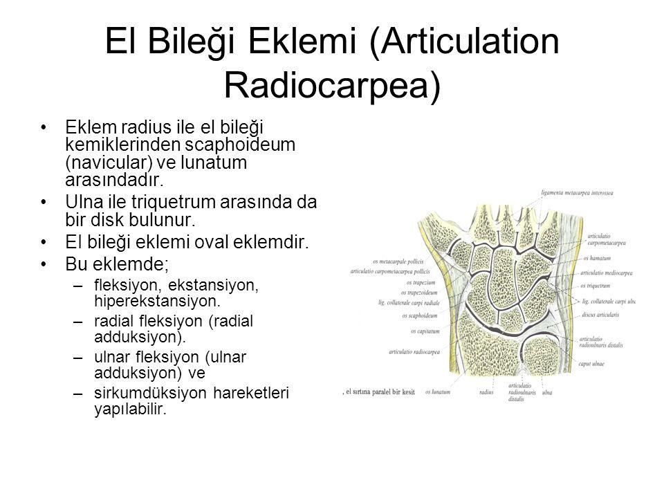 El Bileği Eklemi (Articulation Radiocarpea)