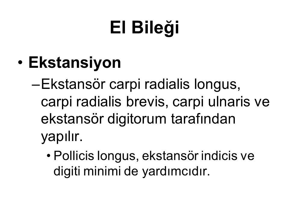 El Bileği Ekstansiyon. Ekstansör carpi radialis longus, carpi radialis brevis, carpi ulnaris ve ekstansör digitorum tarafından yapılır.
