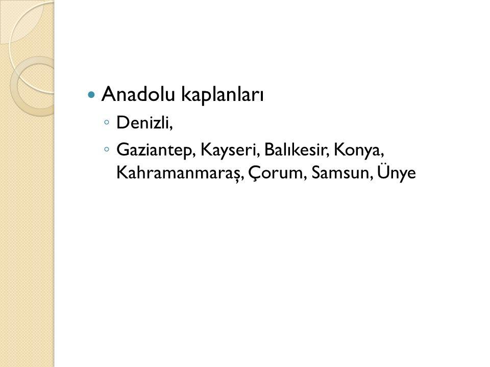 Anadolu kaplanları Denizli,