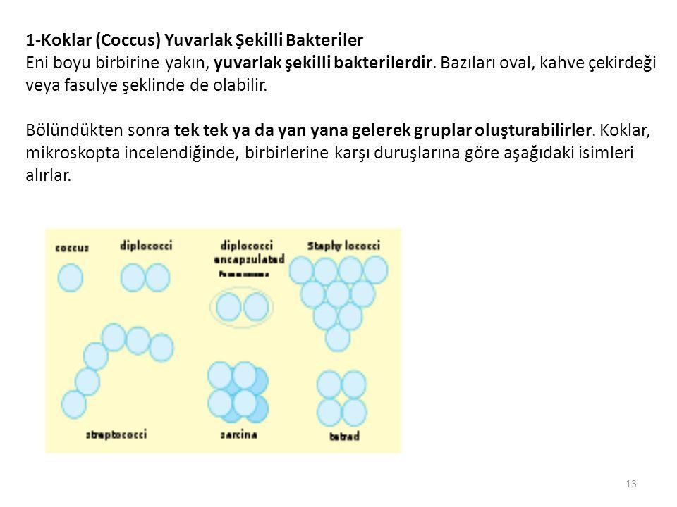 1-Koklar (Coccus) Yuvarlak Şekilli Bakteriler
