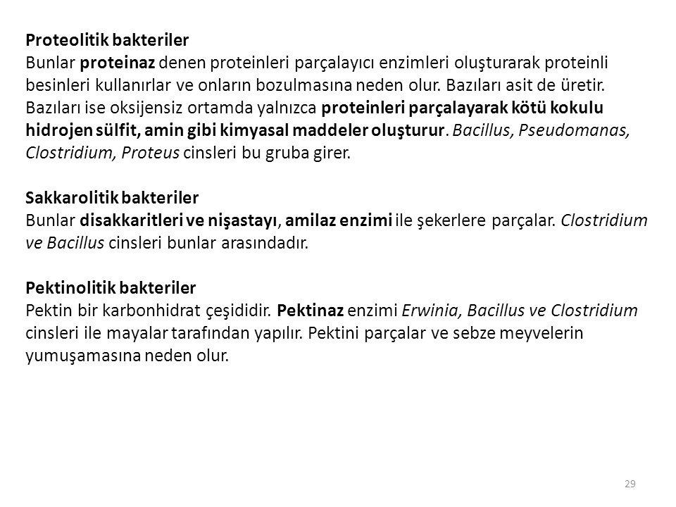 Proteolitik bakteriler