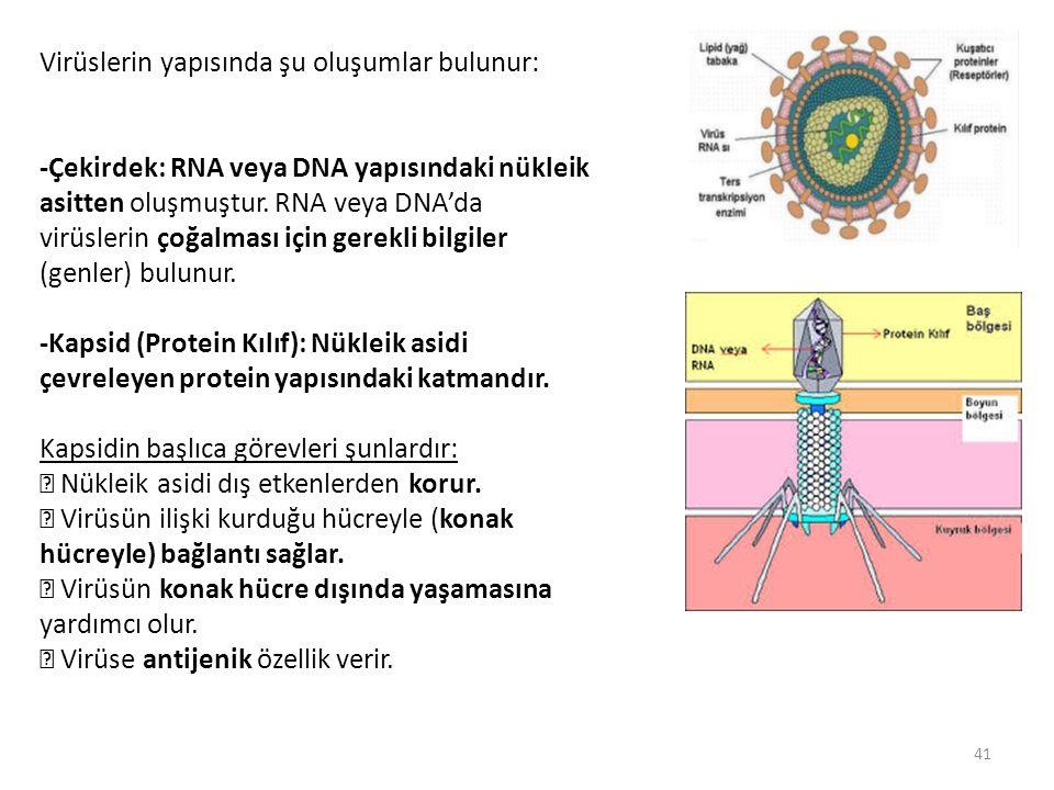 Virüslerin yapısında şu oluşumlar bulunur: