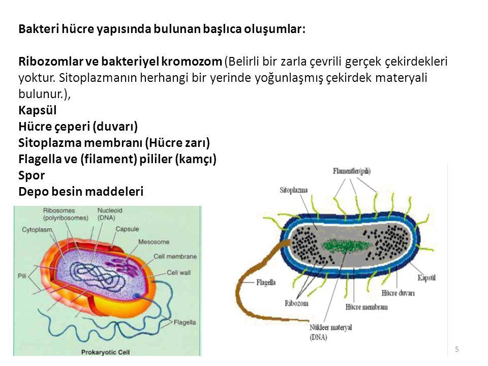 Bakteri hücre yapısında bulunan başlıca oluşumlar: