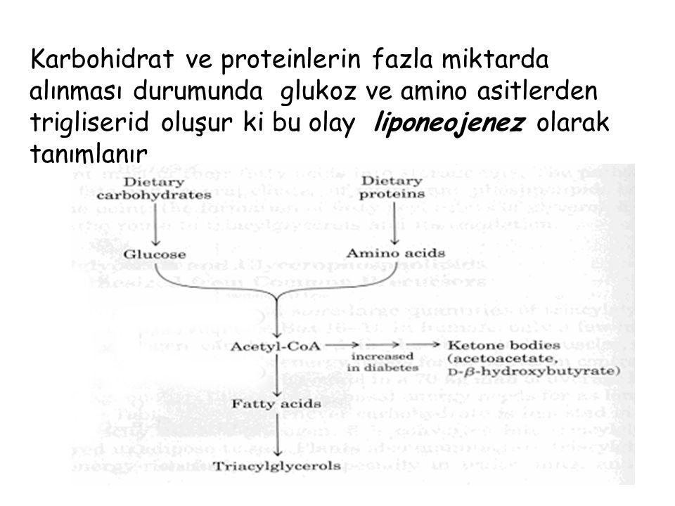 Karbohidrat ve proteinlerin fazla miktarda alınması durumunda glukoz ve amino asitlerden trigliserid oluşur ki bu olay liponeojenez olarak tanımlanır