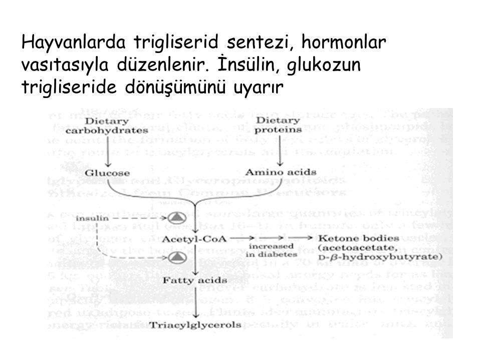 Hayvanlarda trigliserid sentezi, hormonlar vasıtasıyla düzenlenir