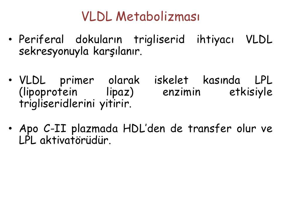 VLDL Metabolizması Periferal dokuların trigliserid ihtiyacı VLDL sekresyonuyla karşılanır.