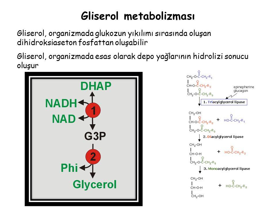 Gliserol metabolizması