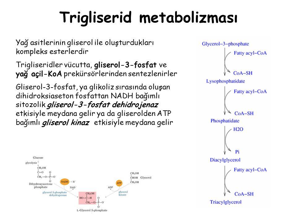 Trigliserid metabolizması