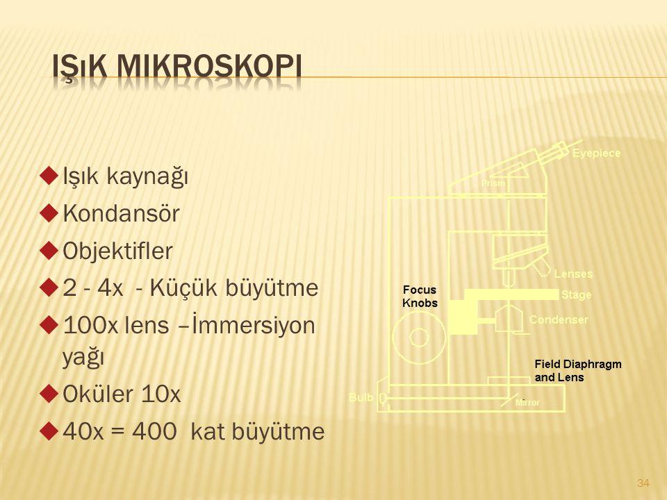 Işık Mikroskopi Işık kaynağı Kondansör Objektifler