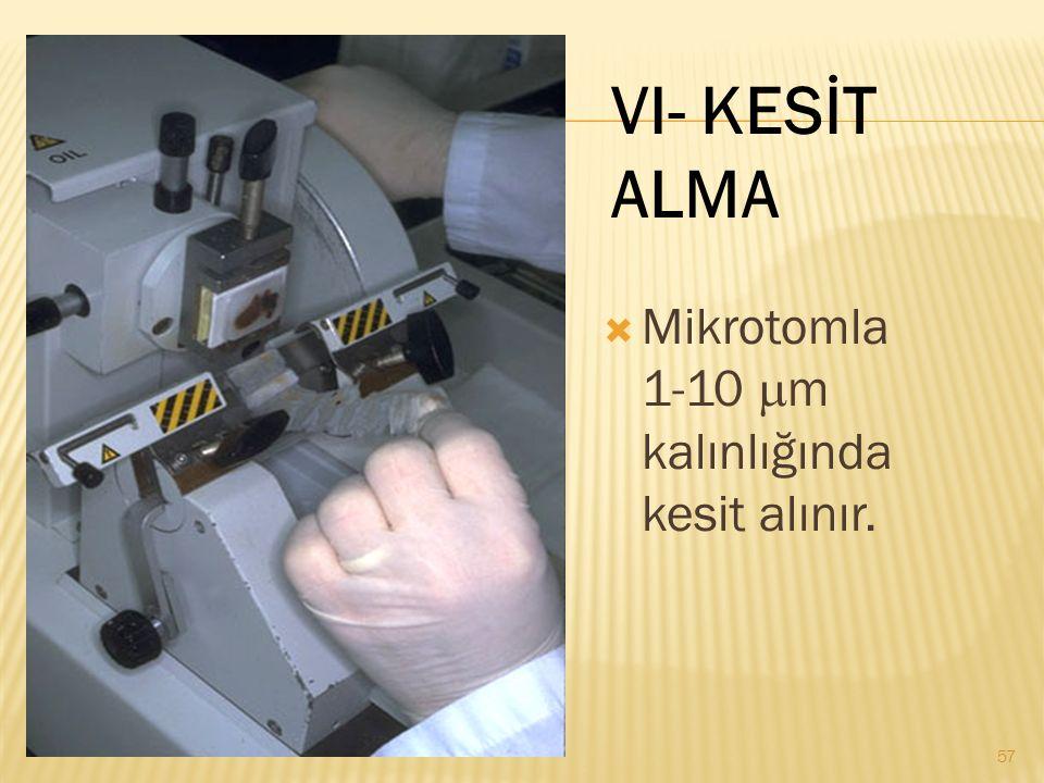 VI- KESİT ALMA Mikrotomla 1-10 mm kalınlığında kesit alınır.