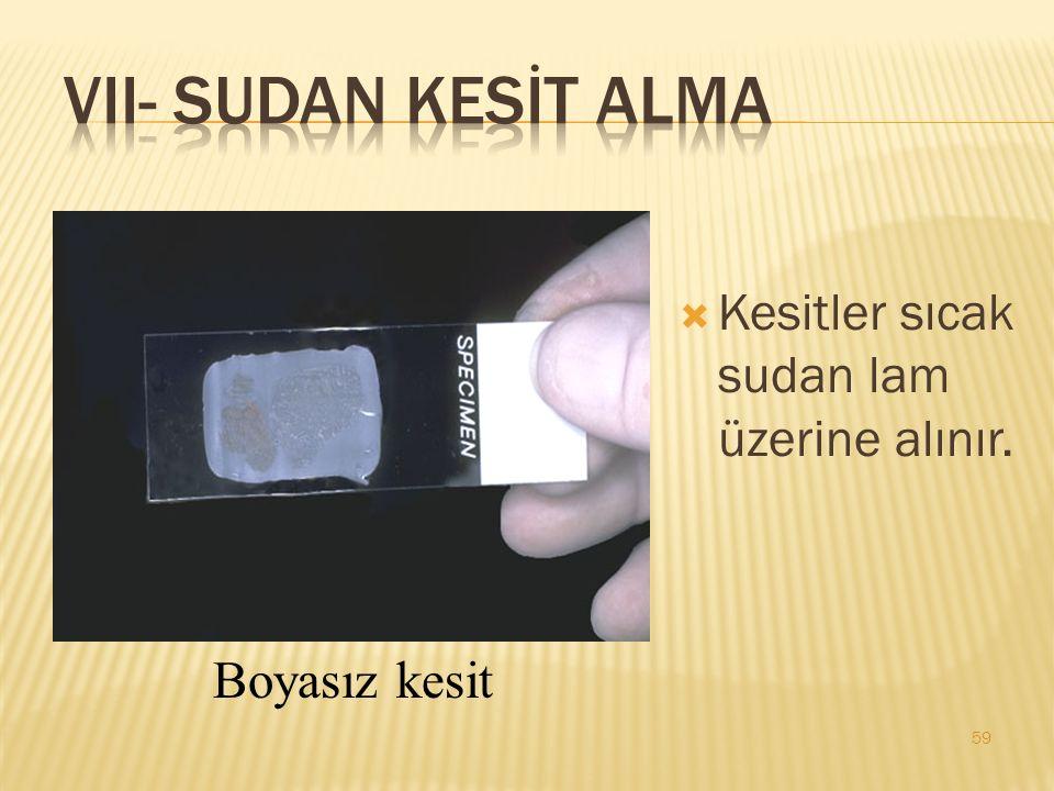 VII- SUDAN KESİT ALMA Kesitler sıcak sudan lam üzerine alınır.