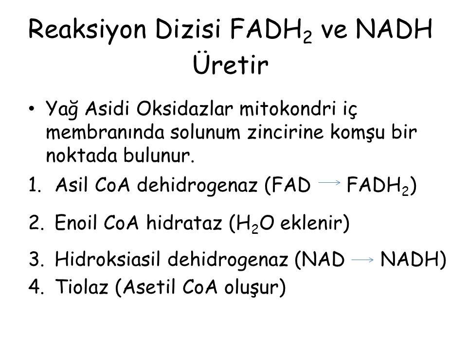 Reaksiyon Dizisi FADH2 ve NADH Üretir