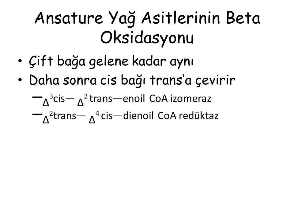 Ansature Yağ Asitlerinin Beta Oksidasyonu