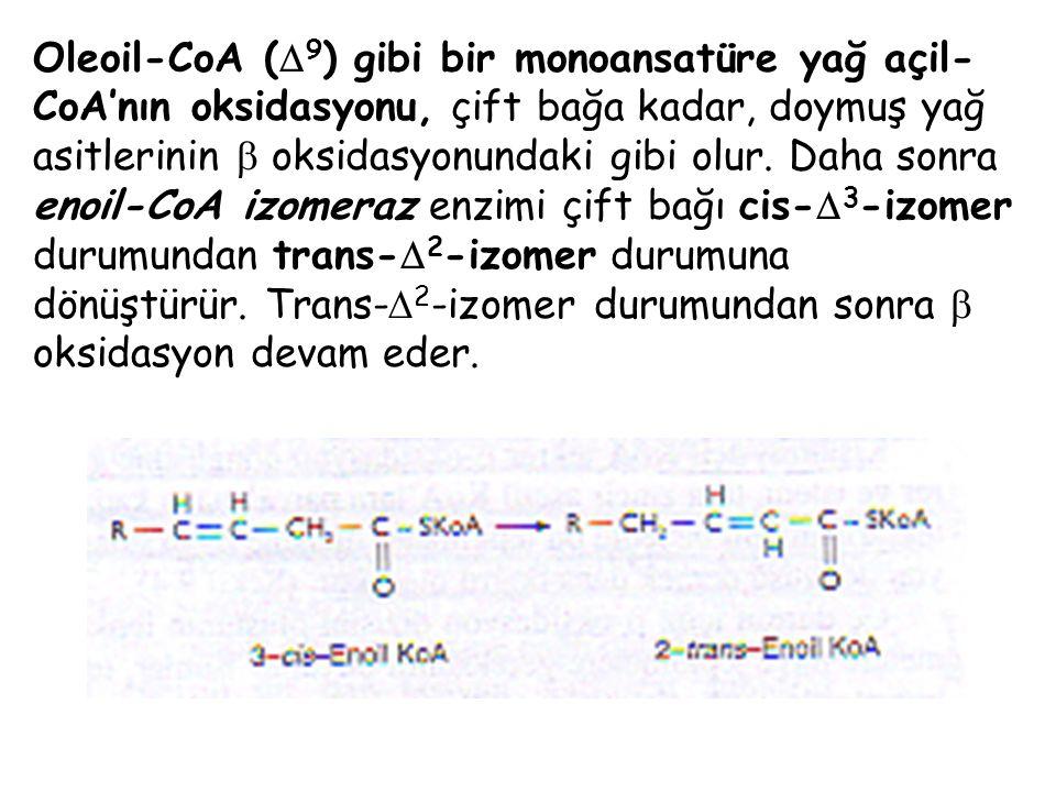 Oleoil-CoA (9) gibi bir monoansatüre yağ açil-CoA'nın oksidasyonu, çift bağa kadar, doymuş yağ asitlerinin  oksidasyonundaki gibi olur.