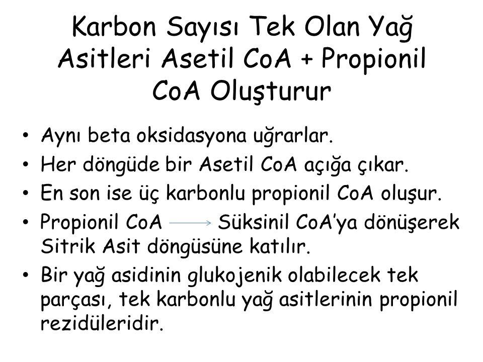Karbon Sayısı Tek Olan Yağ Asitleri Asetil CoA + Propionil CoA Oluşturur