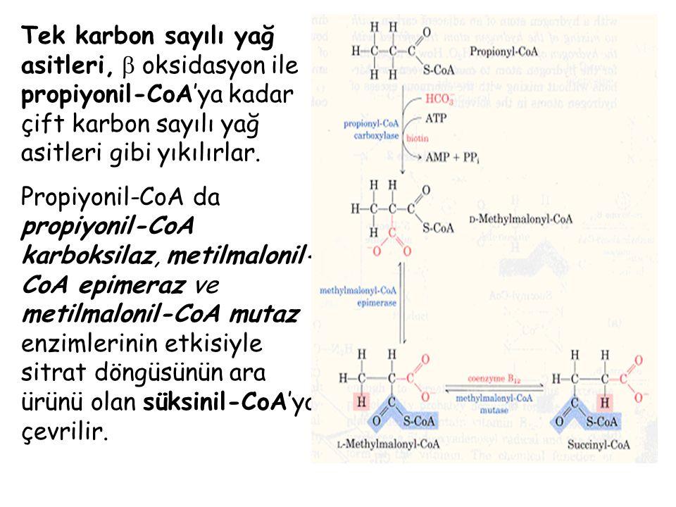 Tek karbon sayılı yağ asitleri,  oksidasyon ile propiyonil-CoA'ya kadar çift karbon sayılı yağ asitleri gibi yıkılırlar.