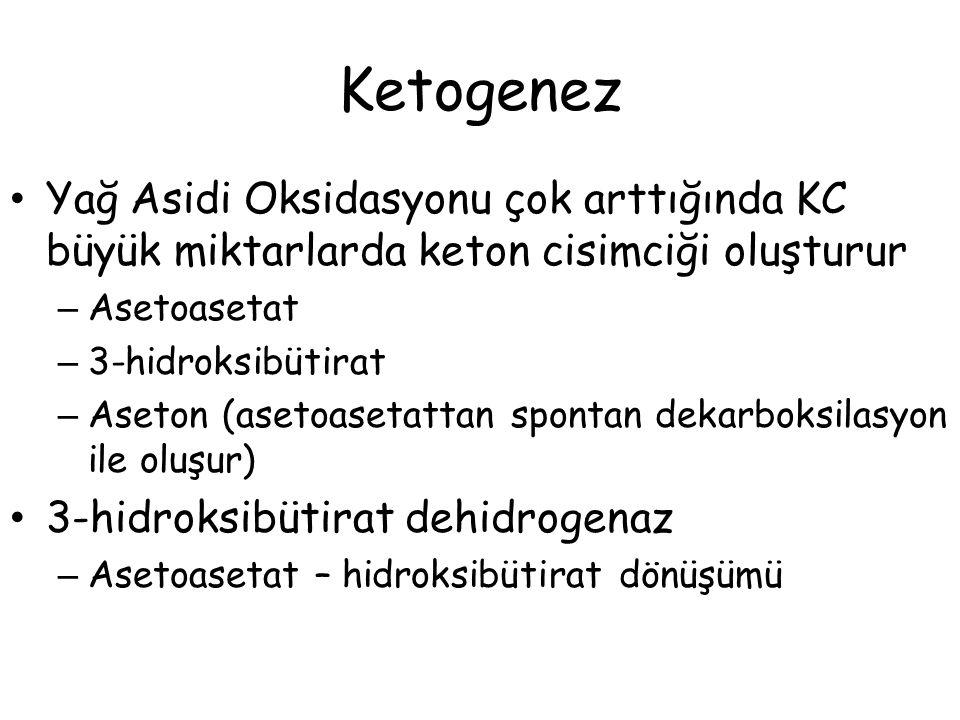 Ketogenez Yağ Asidi Oksidasyonu çok arttığında KC büyük miktarlarda keton cisimciği oluşturur. Asetoasetat.